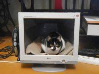 Старый монитор от компьютера как использовать
